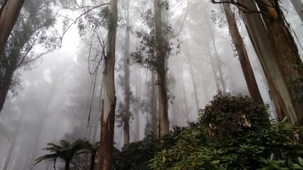 Olinda, Australia